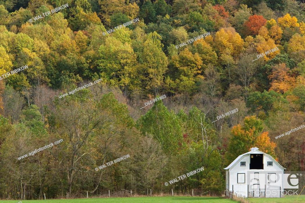 Stock Photo: USA, West Virginia, Seneca Rocks, barn and autumn foliage.