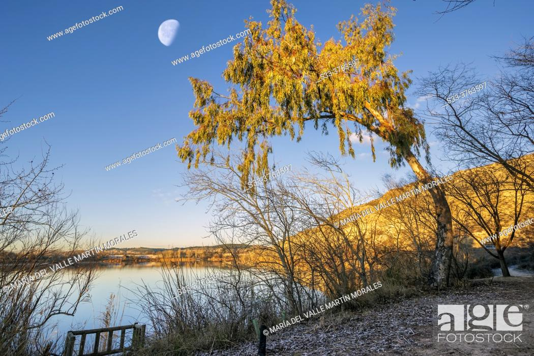Stock Photo: Warped tree and moon over The Campillo lagoon in Rivas Vaciamadrid.. Madrid. Spain. Europe.