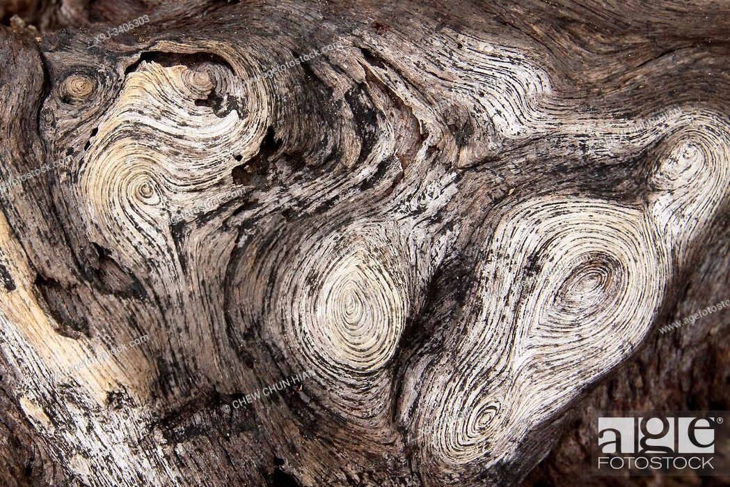 Stock Photo: Artwork made of nature, Natural texture, wooden, Tree pattern.