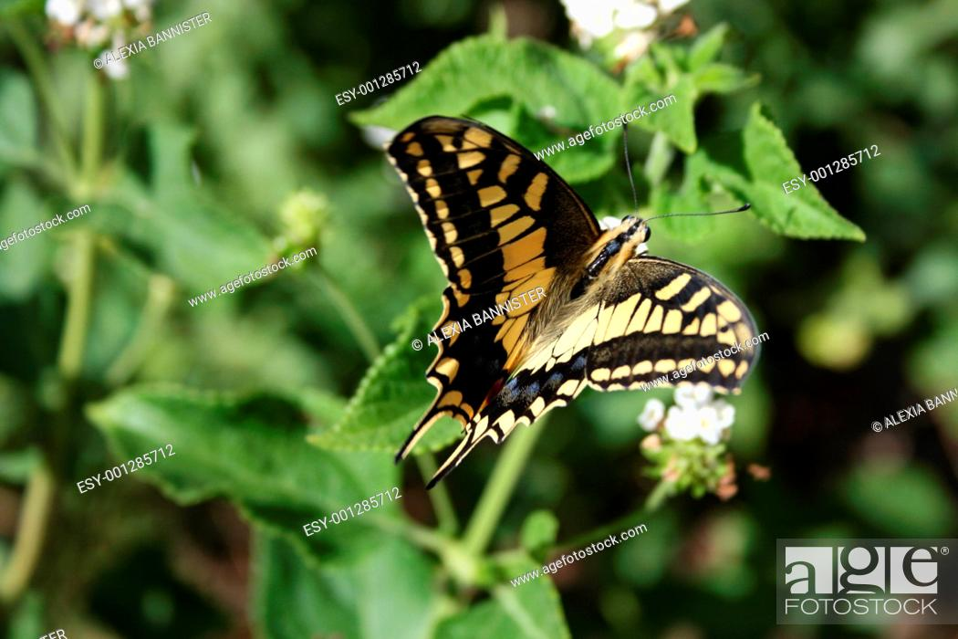 Stock Photo: butterfly.