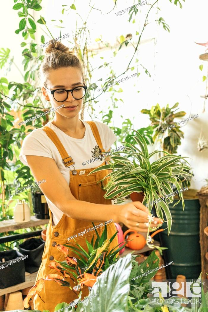 Stock Photo: Young woman caring for plants in a small shop.