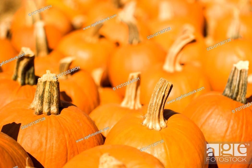Stock Photo: Group of pumpkins at produce market.