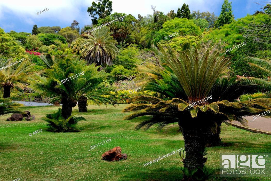 Botanischer Garten Jardim Botanico Da Madeira Funchal Madeira