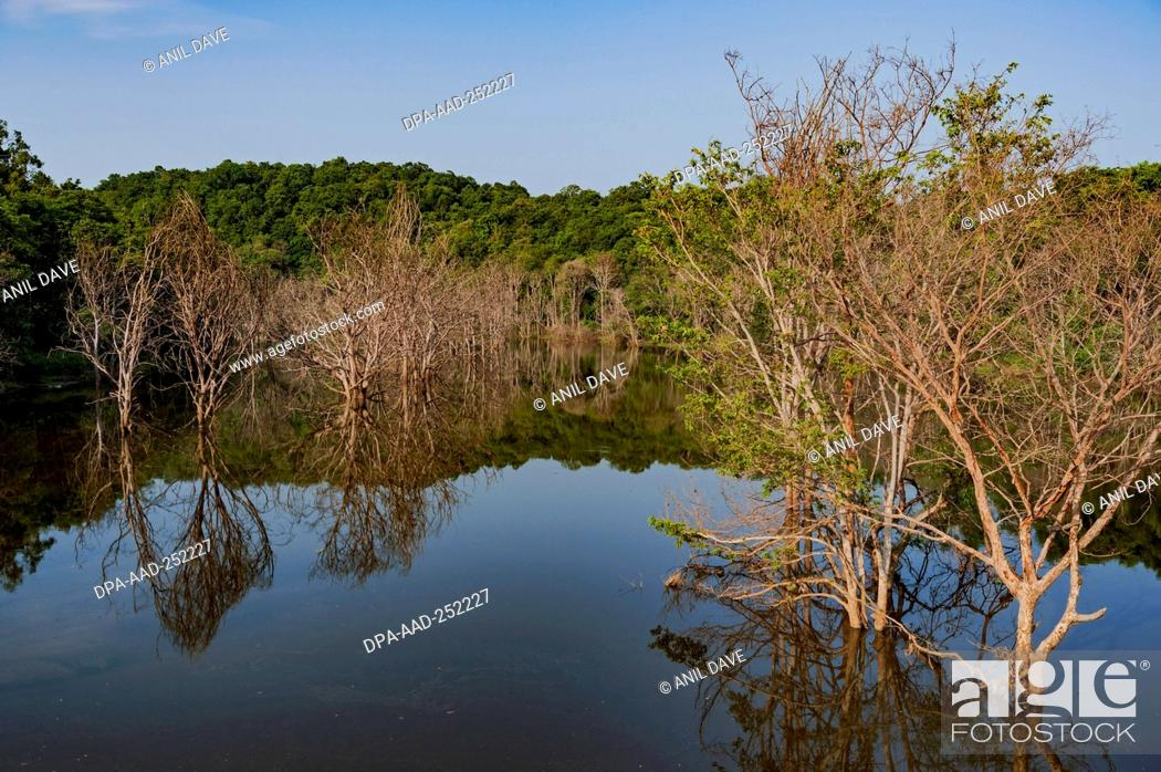 Imagen: River, yellapur, karnataka, india, asia.