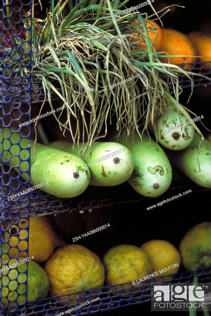 Stock Photo: Opo squash and assorted produce on shelves.