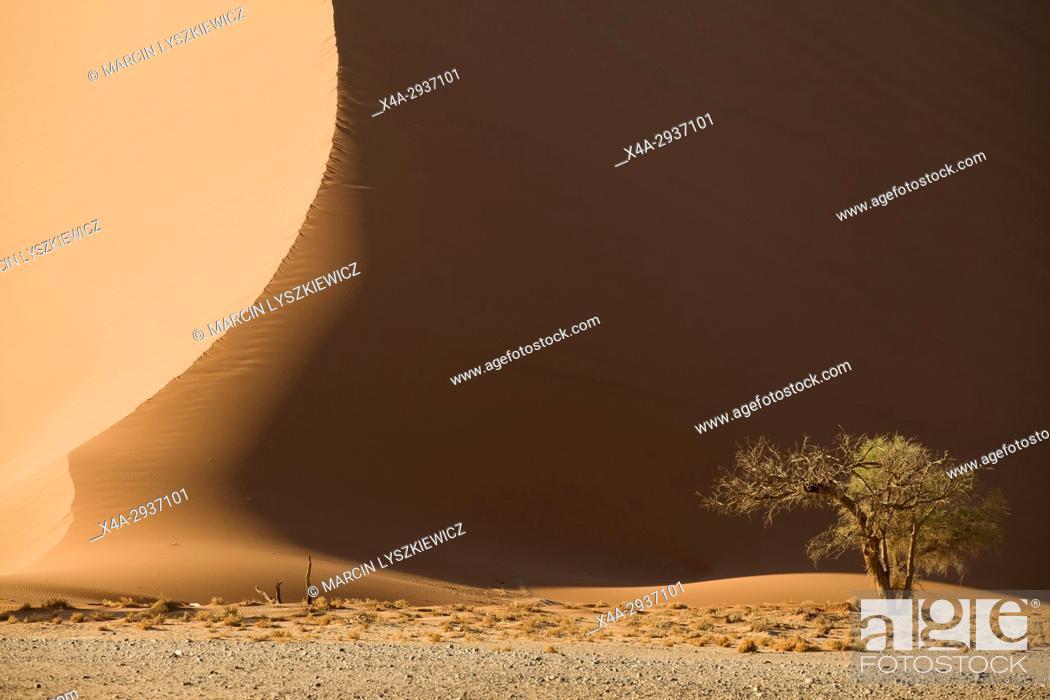 Stock Photo: A dune and a tree, Namib desert near Soussuvlei, Namib-Naukluft National Park, Namibia.