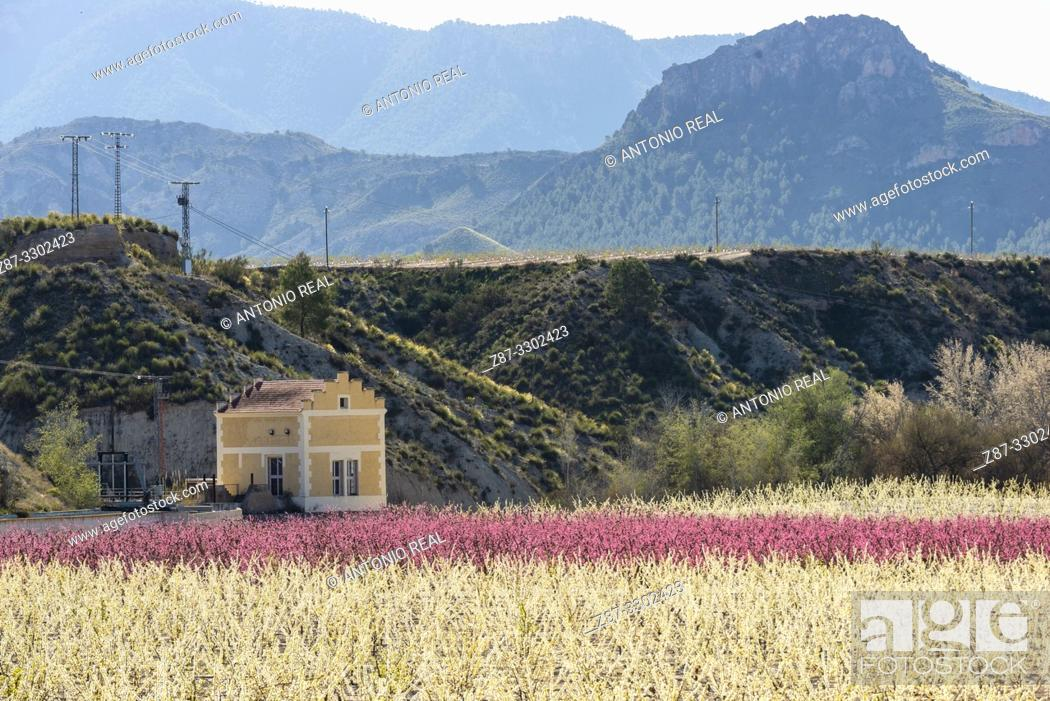 Stock Photo: Irrigation channel and blooming plum field. Cieza. Murcia. Spain.