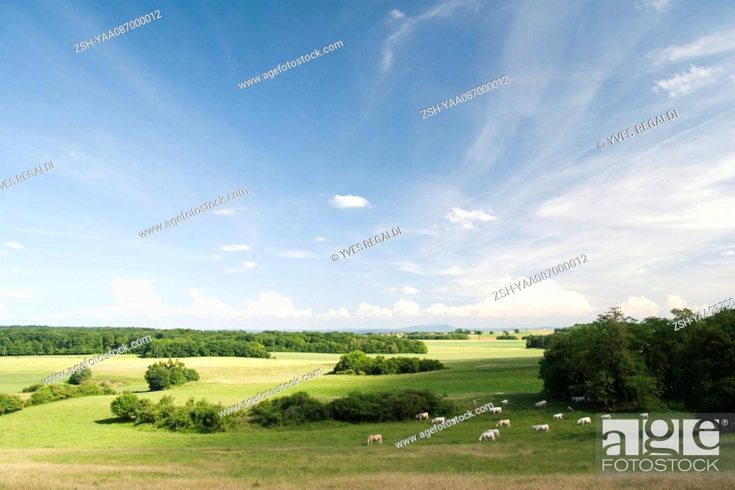 Stock Photo: Scenic countryside with cattle grazing in distance.