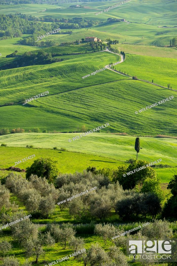 Stock Photo: View of the Val d'Orcia near Pienza in Tuscany, Italy with Italian cypress trees (Cupressus sempervirens) and gravel road going to a farm house.