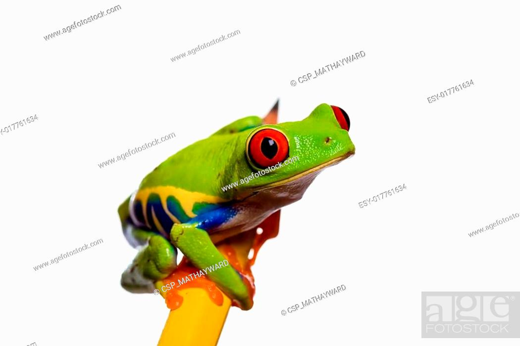 Stock Photo: Frog on a pencil.
