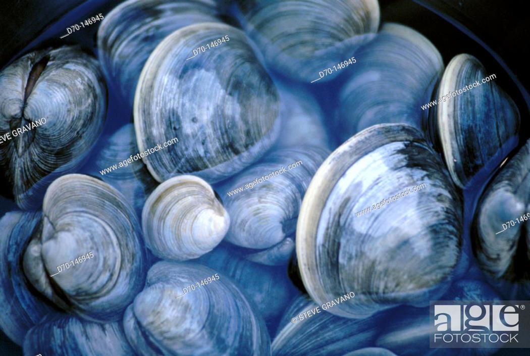 Stock Photo: Shells.