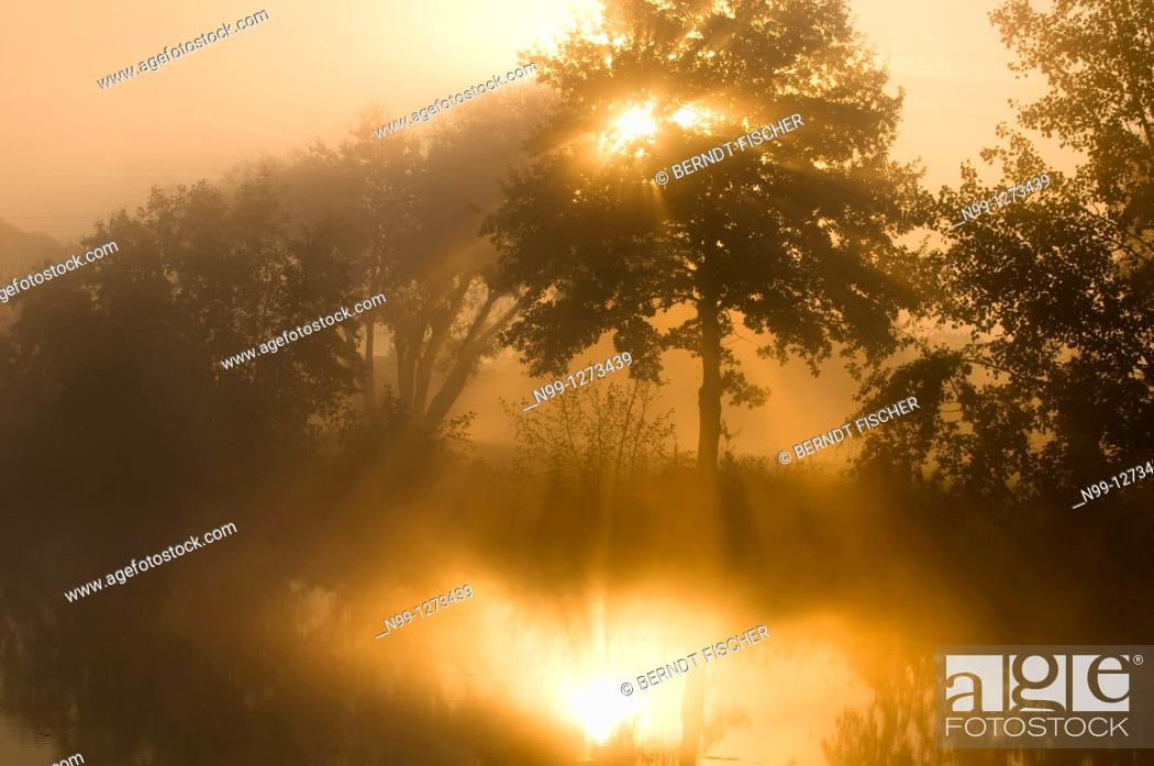 Stock Photo: Mist at sunrise, reflection in dead arm of river Regnitz, riparian forest, Bavaria, Germany.