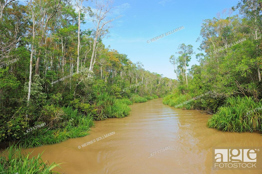 Stock Photo: Sekonyer River, Province Kalimantan, Borneo, Indonesia.