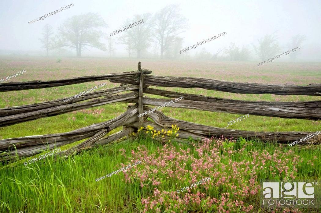 Stock Photo: Cedar split-rail fence with prairie smoke and distant oak trees in light fog.