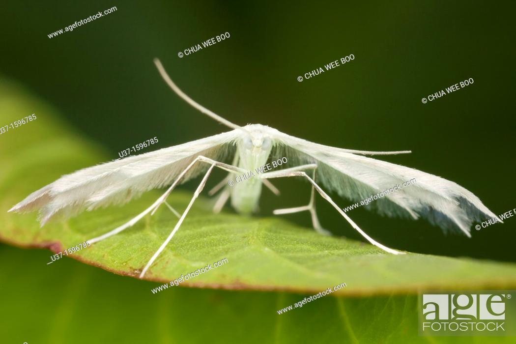 Stock Photo: Moth.