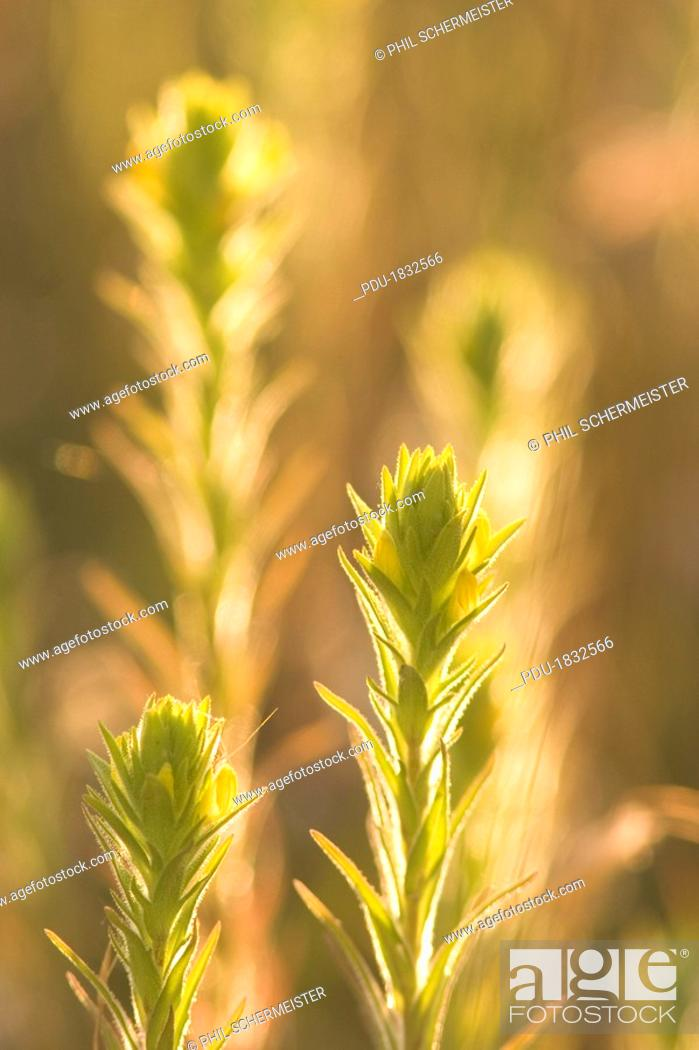 Stock Photo: Close up of prairie plants shot in late afternoon in the grasslands.