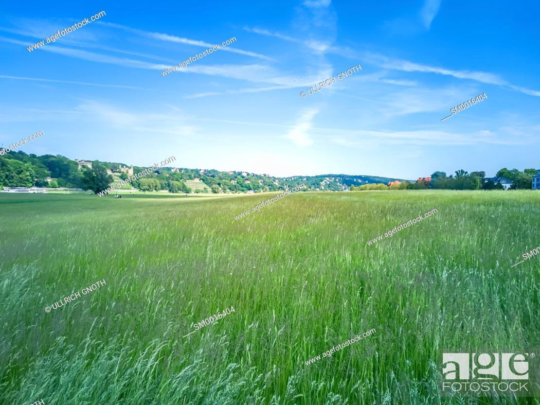 Stock Photo: Urban scenery with Elbe riverside meadows in Johannstadt, Dresden, Saxony, Germany.