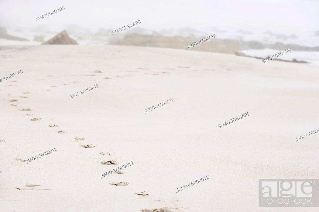 Stock Photo: Footprints on sand at beach.