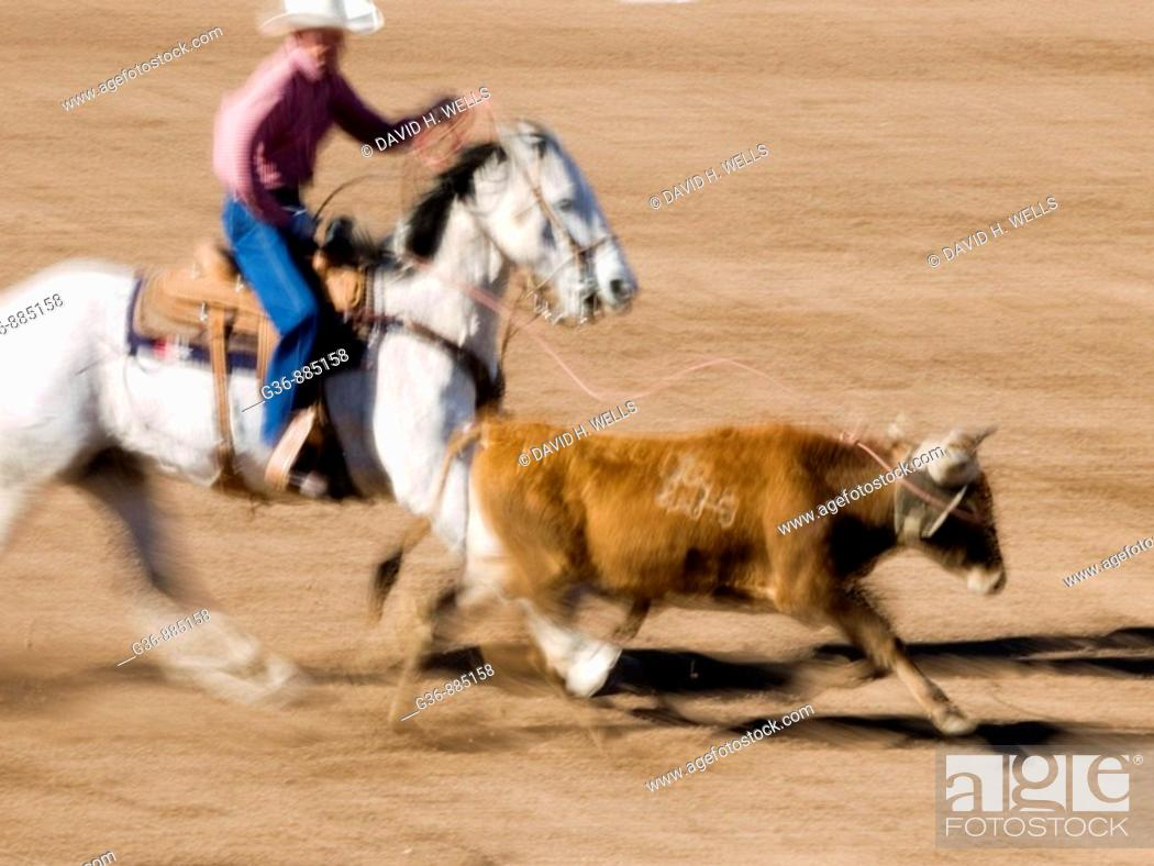 Stock Photo: Roping competition at the Tucson Rodeo in Tucson, Arizona, United States.