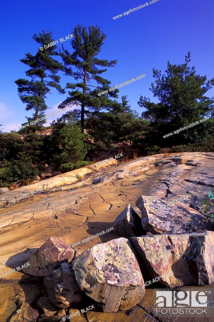 Photo de stock: Granite Bedrock of the Canadian Shield and Pine Trees, Whitefish Falls, North of Manitoulin Island, Georgian Bay, Lake Huron, Ontario, Canada.