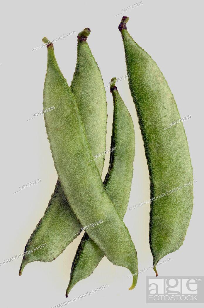 Imagen: Hyacinth Beans.