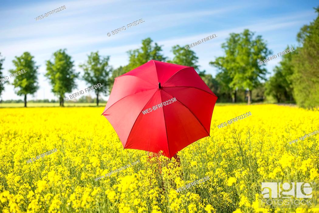 Stock Photo: Woman with red umbrella standing amidst oilseed rapes against sky.