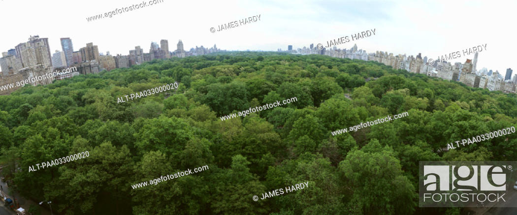 Stock Photo: United States, New York, Central Park, treetops with skyline in background, panoramic view.