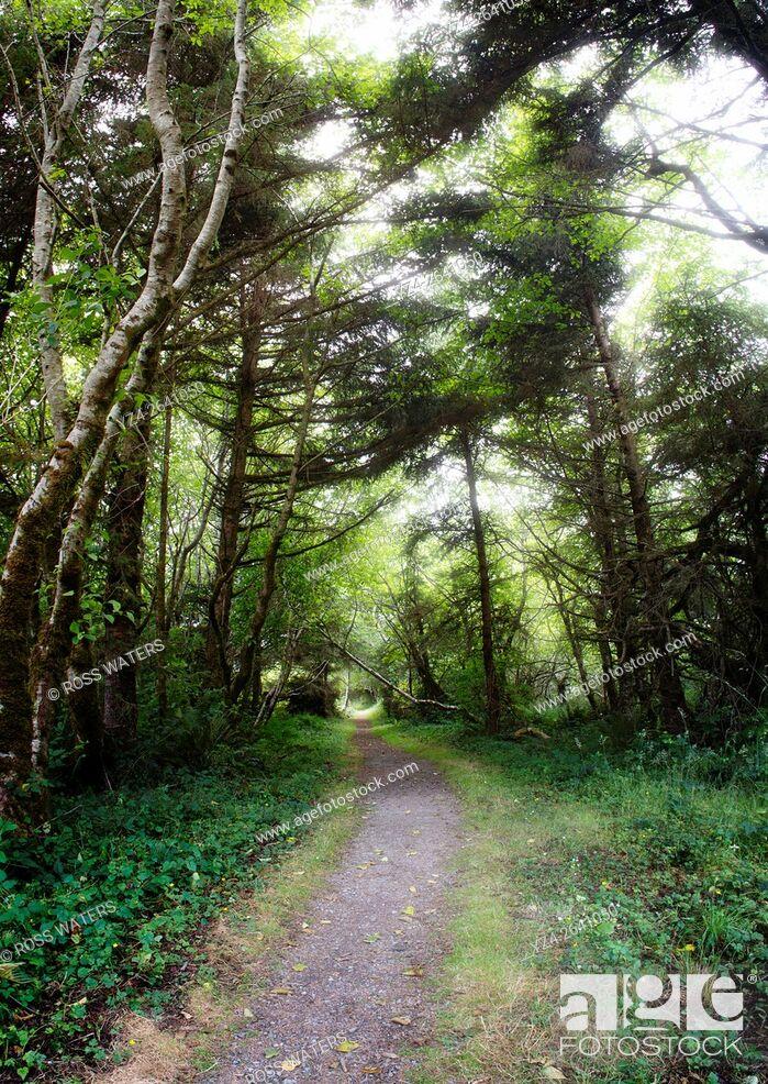 Stock Photo: The Yurok Loop hiking trail, Klamath, California, USA.