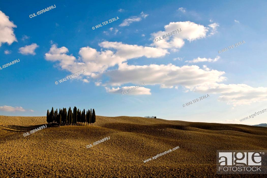 Stock Photo: Ploughed fields and cypress trees, Tuscany, Italy.