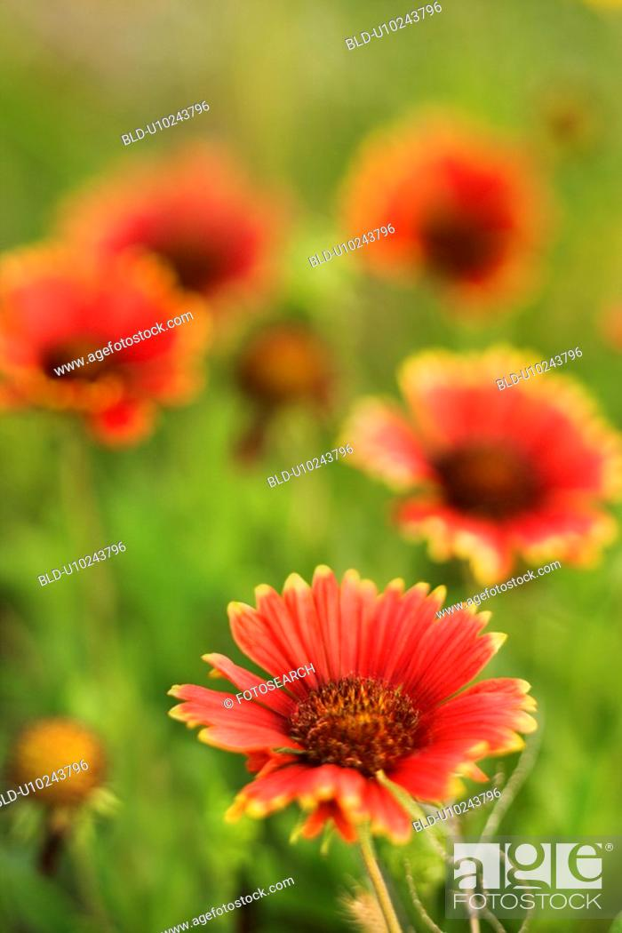 Stock Photo: Red and yellow flowers growing wild.