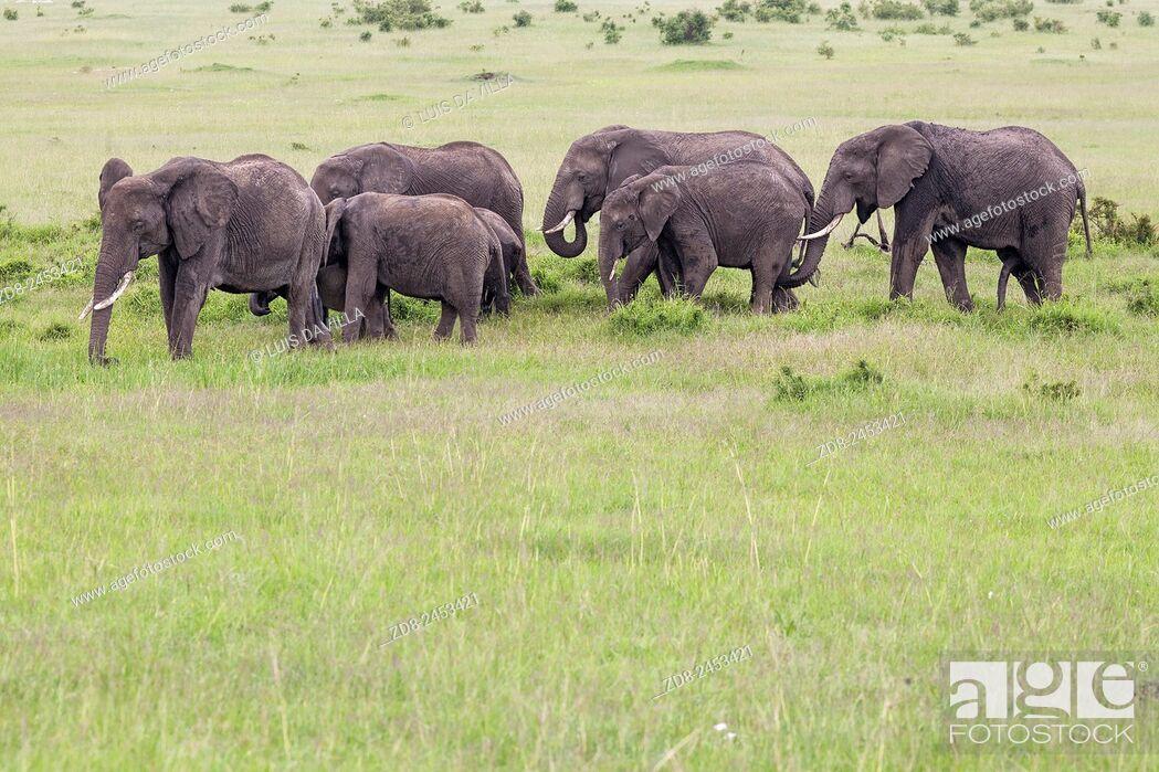 Imagen: elephants in masai mara national park.