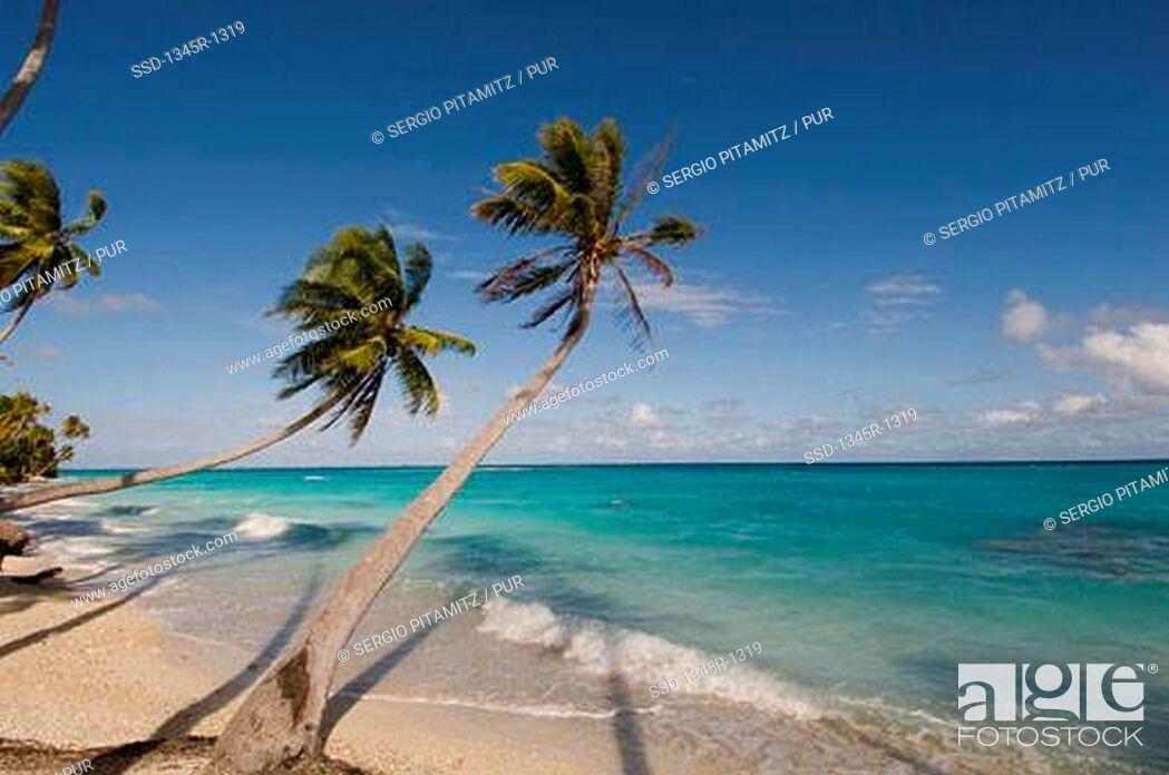 Imagen: Palm trees overhanging the beach, Fakarava, Tuamotu Archipelago, French Polynesia.
