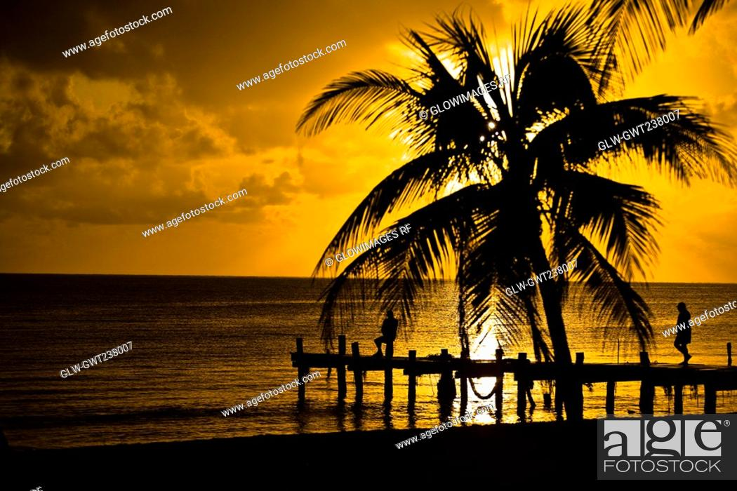 Stock Photo: Silhouette of a pier and a palm tree at a seaside, Punta Allen, Quintana Roo, Mexico.