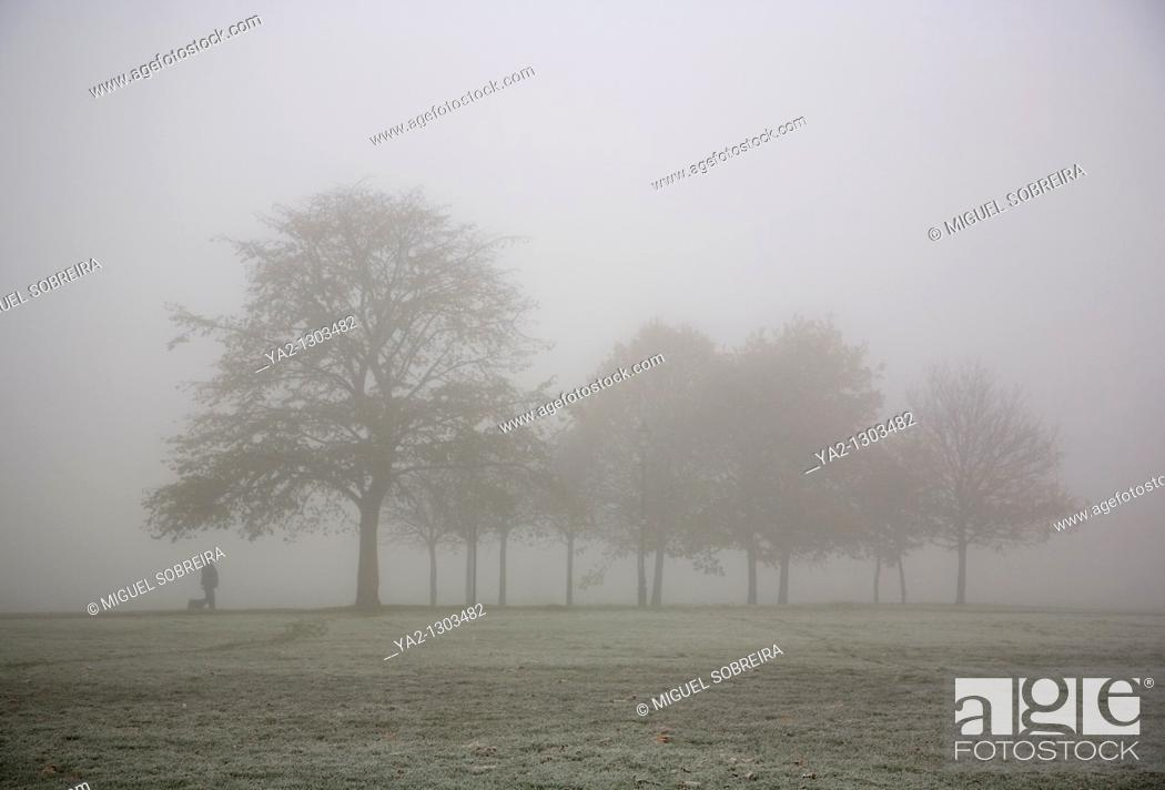 Imagen: Foggy Clapham Common Tree.