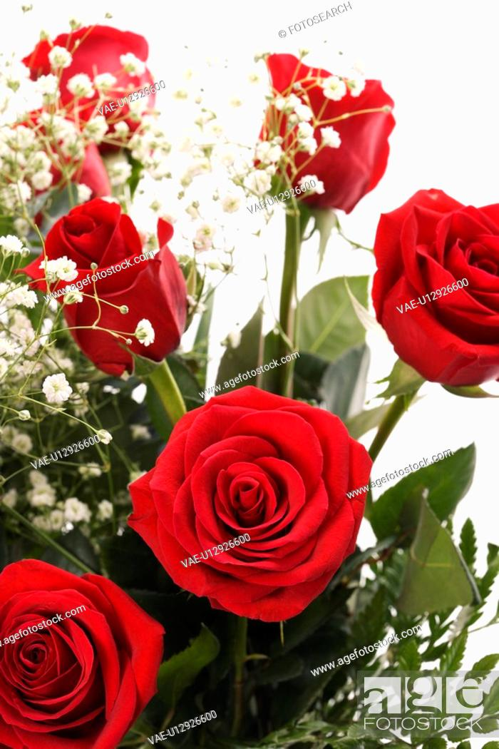 Stock Photo: Close-up of bouquet of long-stemmed red roses with baby's breath against white background.