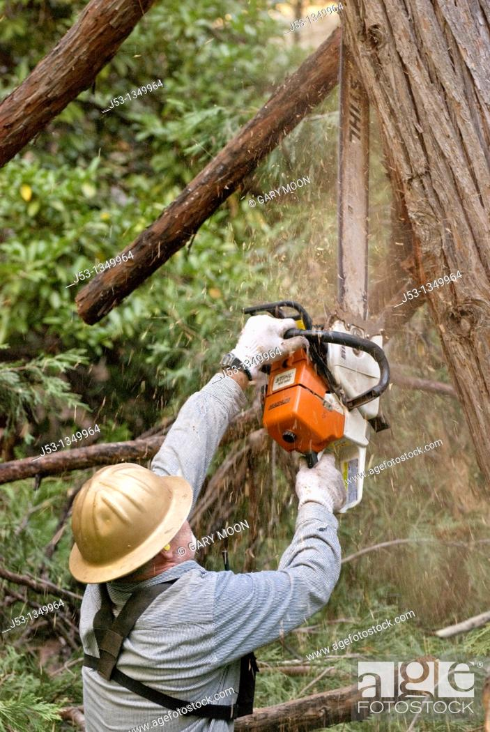 Stock Photo: Logger with chainsaw trimming limbs on felled tree.