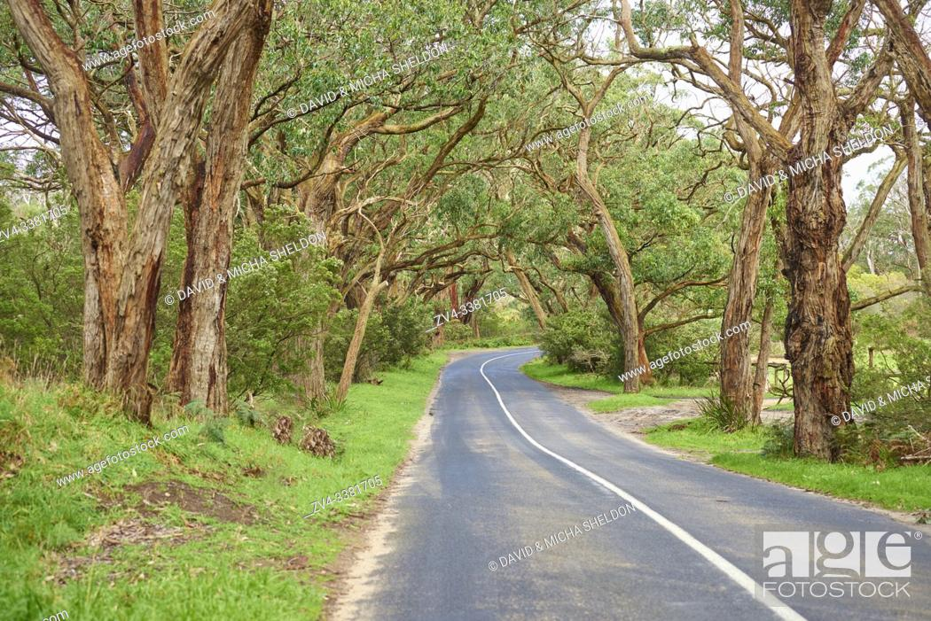 Stock Photo: Landscape of a road (Lighthouse Road) going through a Gum tree (Eucalyptus) forest in spring, Great Otway National Park, Australia.