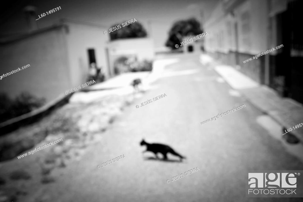 Stock Photo: Cat, Los Albaricoques, Cabo de Gata, Almeria Province, Andalusia , Spain.
