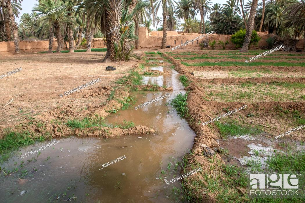Imagen: Water channel used for irrigation of alfalfa (Medicago sativa) field, Tighmert Oasis, Morocco.