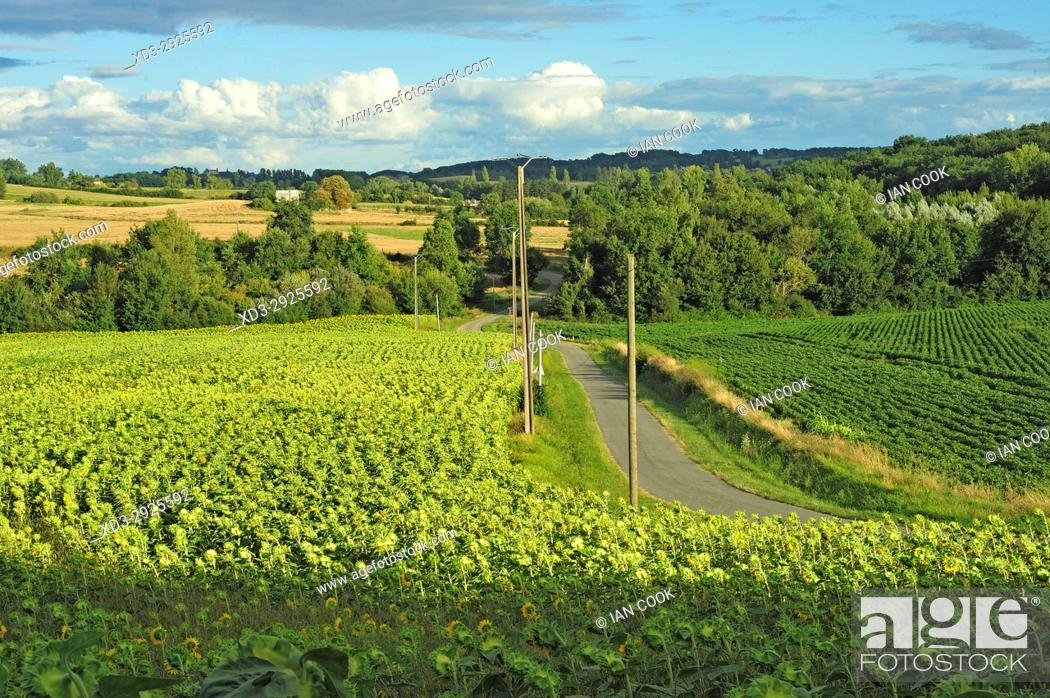 Stock Photo: countryside, Lot-et-Garonne Department, New Aquitaine, France.