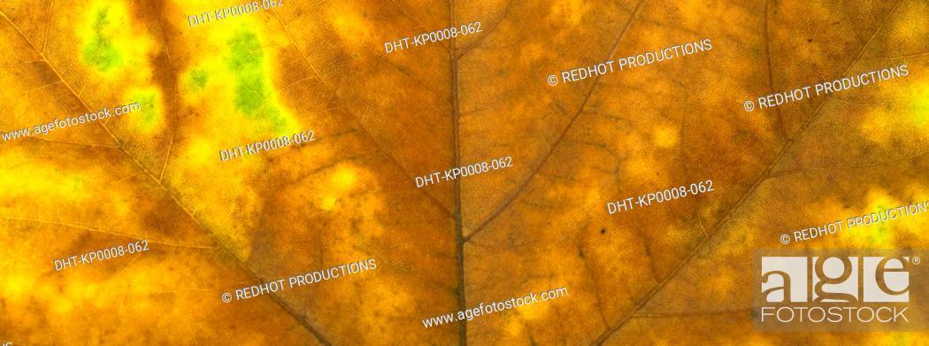 Stock Photo: One Autumn leaf close up.