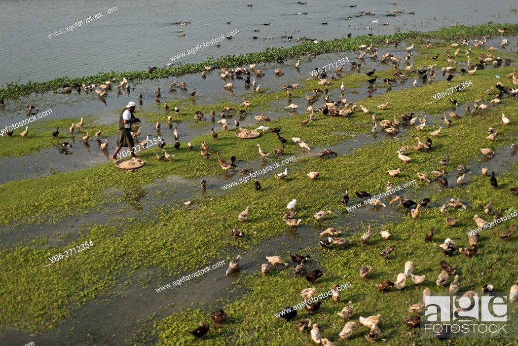 Stock Photo: A duck herder with his flock at the Taungthaman Lake, Amarapura, Myanmar.