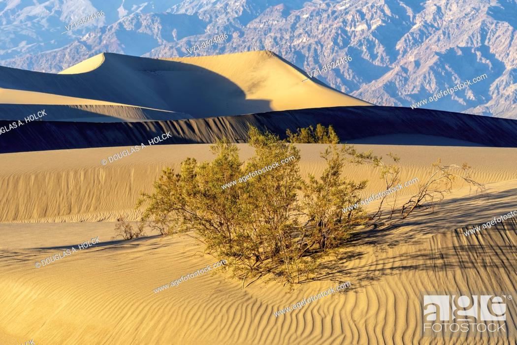 Imagen: Late Afternoon on Mesquite Dunes Death Valley National Park.