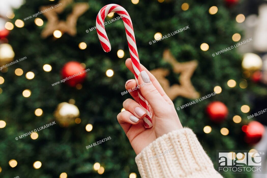Stock Photo: Hand of Caucasian woman holding candy cane near Christmas tree.