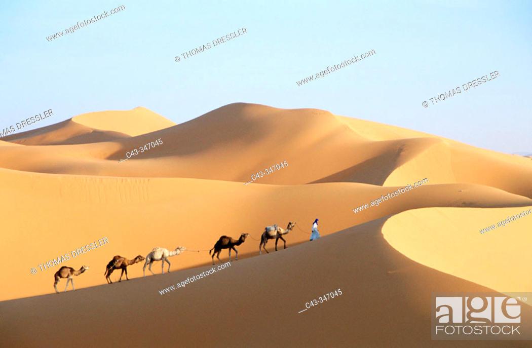 Stock Photo: Berber with dromedaries in the great sand dunes of Erg Chebbi at Merzouga, Sahara desert. Southeast Morocco.