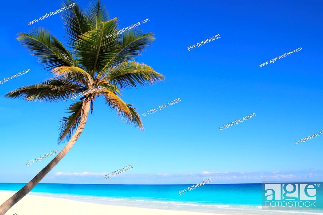 Stock Photo: Caribbean coconut palm trees in tuquoise sea water.