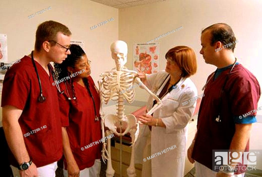 Stock Photo: Female doctor using a human skeleton to teach medical students in a medical class.