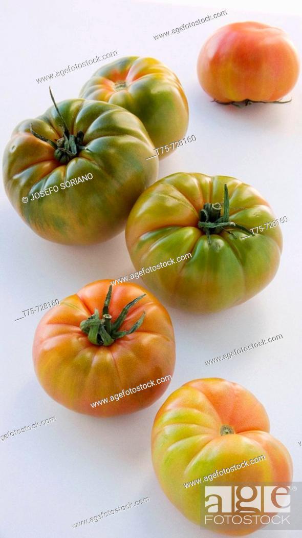 Stock Photo: Tomatoes 'Raf'.
