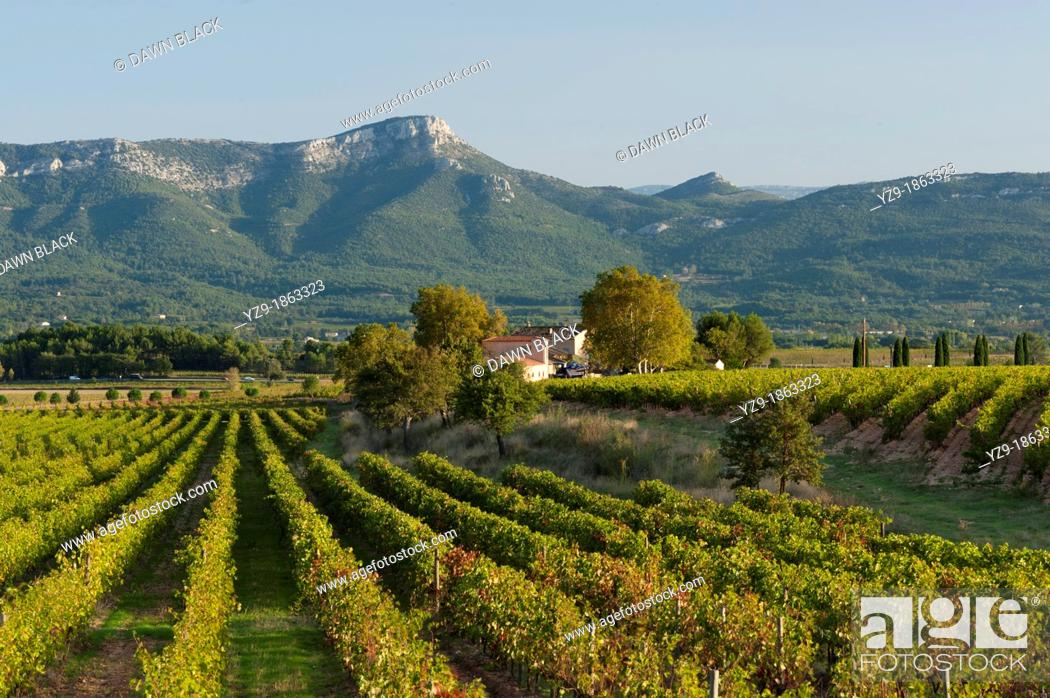 Stock Photo: Vineyard with the Massif de Sainte Baume behind, Provence, France.