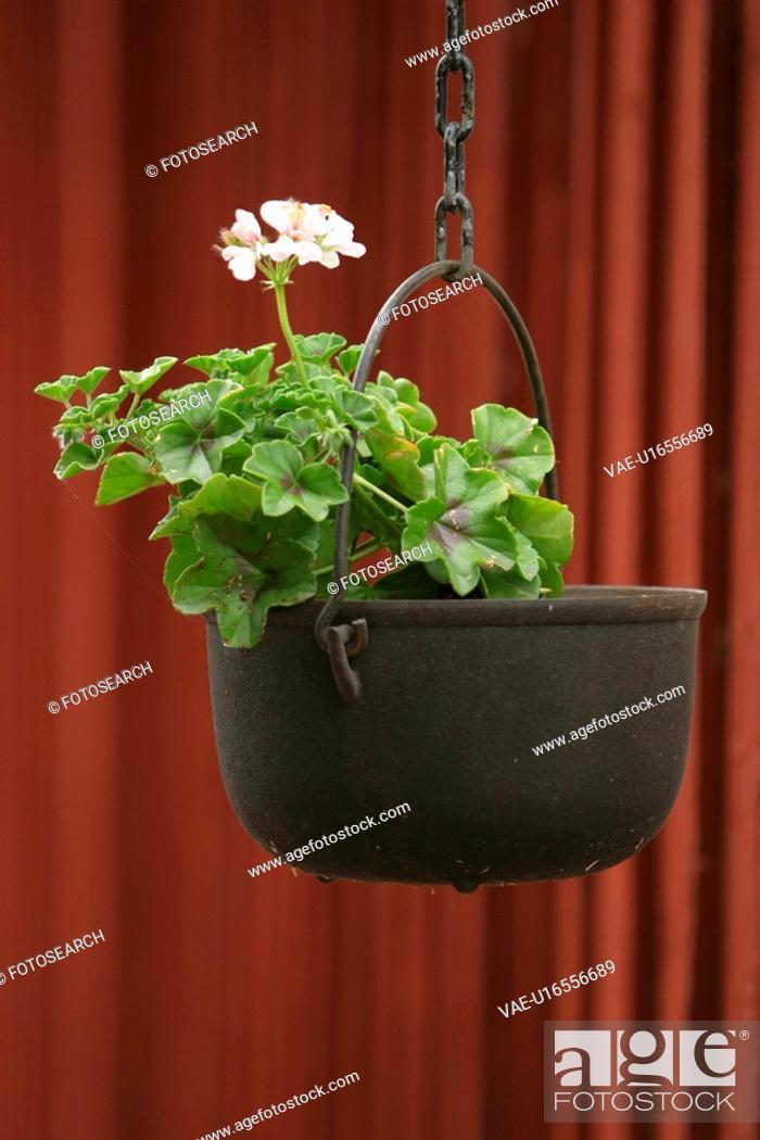Stock Photo: petal, plant, grow, close-up, life, stem.